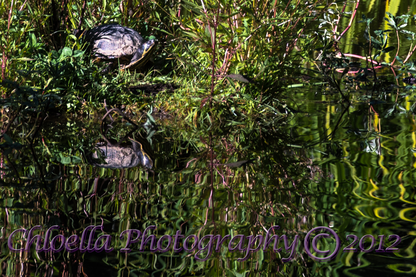 20120906-FX8_Turtle