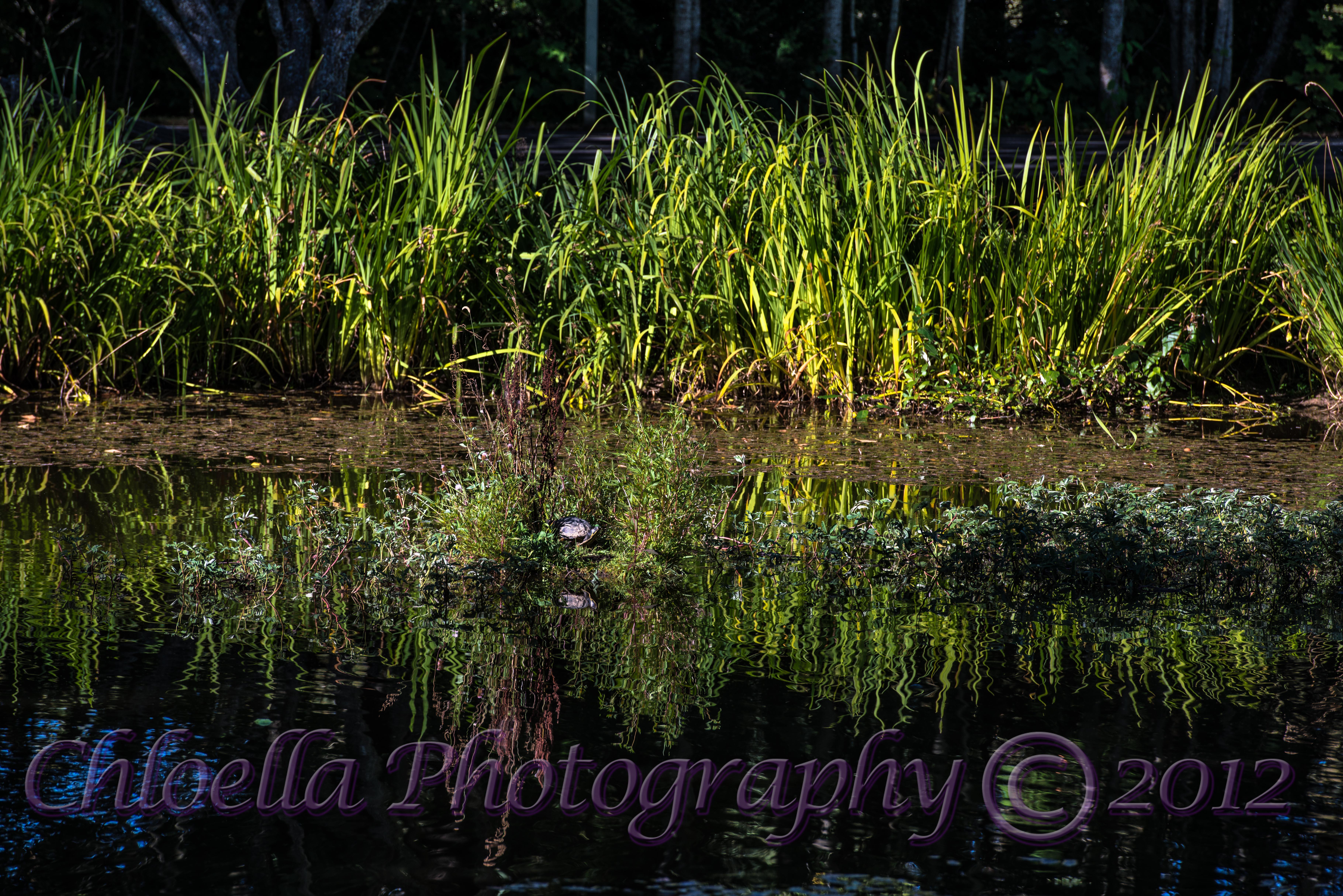 20120906-FX8_Pond